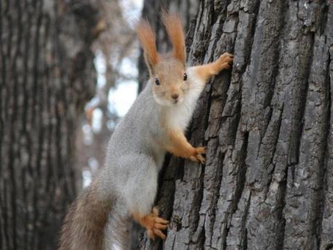 В Кисловодске устроили охоту на белок, обнаружены ловушки в парке