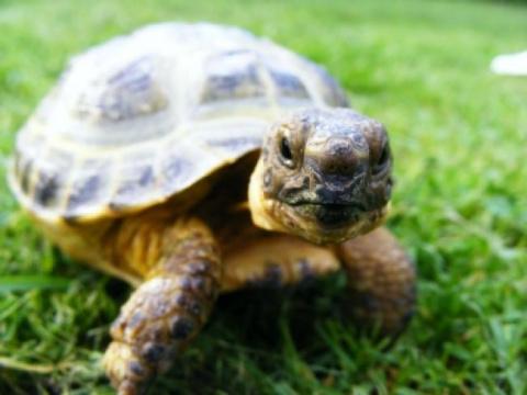 Черепахи пытались сбежать из…