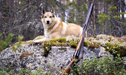 Собака застрелила охотника и…