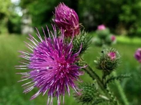 Растения, защищающие дом от …