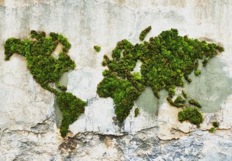 Экологически чистый стрит-арт: граффити, нарисованные мхом