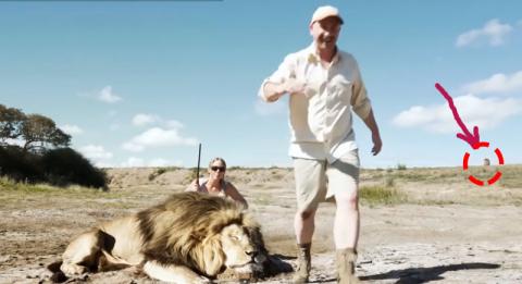 Браконьеры, пожелавшие сделать фото у трупа убитого льва, нечаянно засняли свою гибель