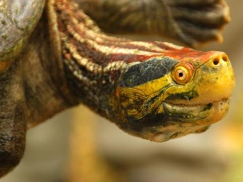 Черепахи в опасности
