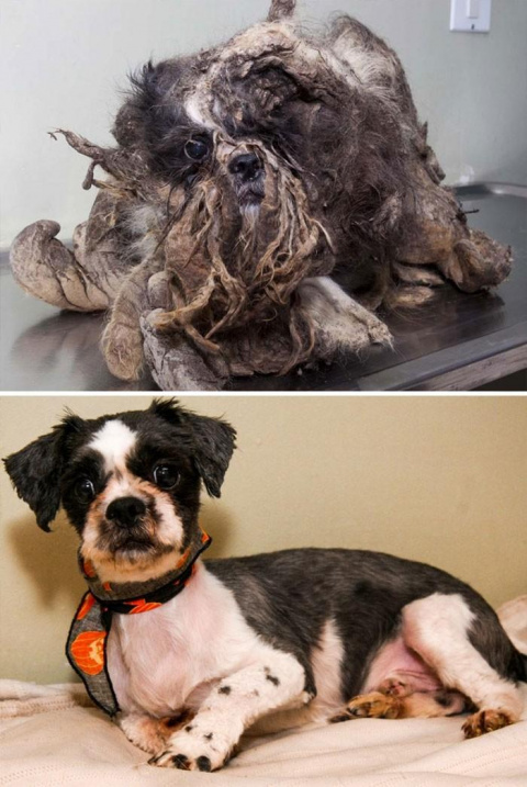 Истории спасения собак, нахо…