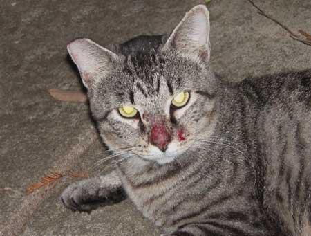 КОШКИН ДОМ. Аллергия у кошек (вып. 2-й)