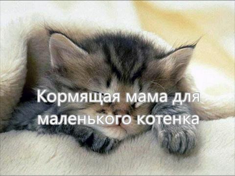 Голодный и несчастный котенок, он наконец то нашел маму.