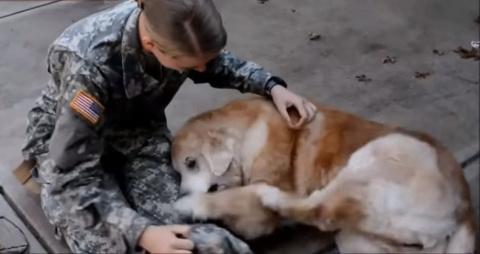Собаки, которые не видели хо…