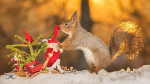Белочки, которые создают рождественское настроение!