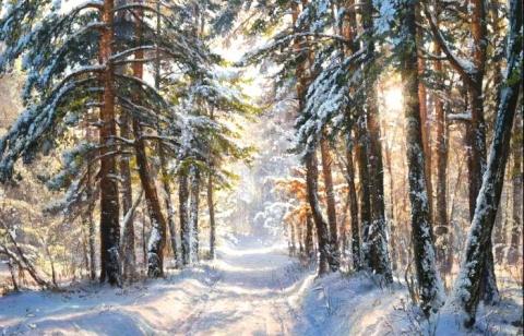 Очарование зимы на картинах …