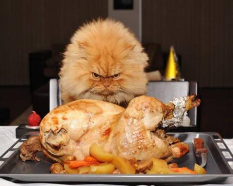 20 забавных котиков, которые попали в интернет и стали знамениты