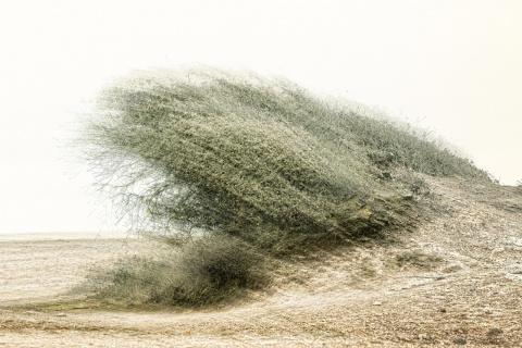 Инфографика: при какой скорости ветер считается опасным