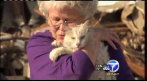 Кошка, пропавшая после урага…