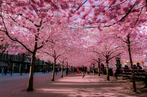 Как отдельные улицы расцвета…