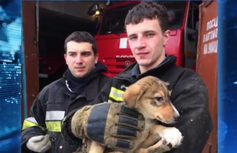 Спасенный щенок стал «сыном полка» в пожарном депо