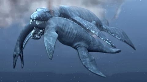 Необычные новые виды животных