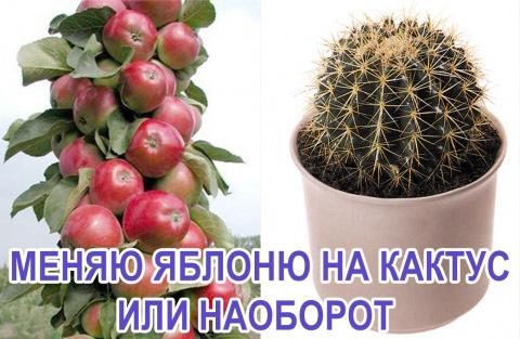 обмен растениями, растения бесплатно, растения в дар, отдам цветок бесплатно, отдать саженцы, саженцы в подарок, бесплатно, зеленая серия, аэрозольная побелка, аэрозольный садовый вар