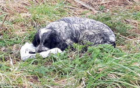 Он нашел брошенную собаку с …