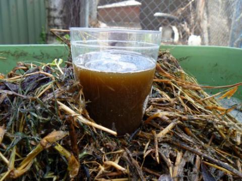 Компостный «чай» — лучшее натуральное удобрение