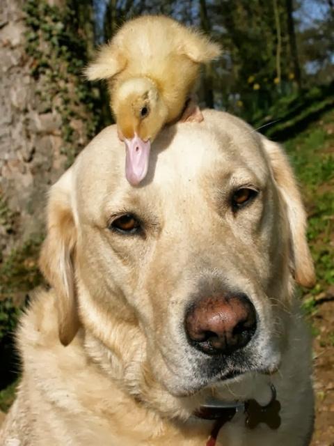 Материнский инстинкт животных