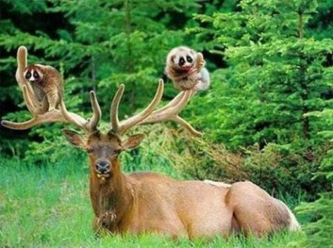 Невероятные примеры дружбы животных! (смотрим и умиляемся!)