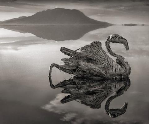 Cмертельное озеро Натрон