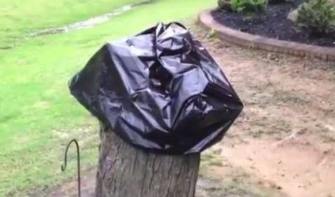 Превращаем засохшее дерево в украшение участка