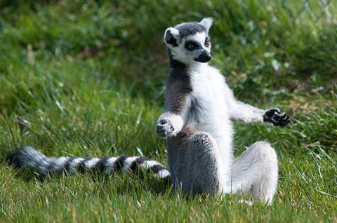 Животные, которым йога дается лучше, чем вам!