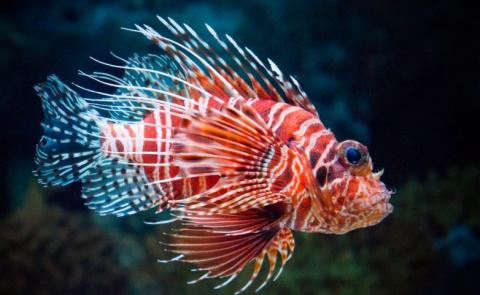 Очень опасные морские сущест…