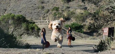 Удачный кадр: как ваша собака может превратиться в гиганта!