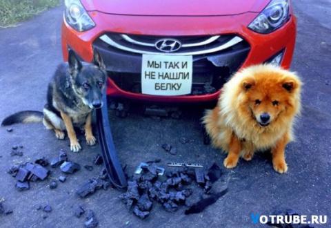Этим собакам очень стыдно)