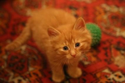 Котята с хорошими манерами устраивают кастинг новых домов с любящими хозяевами
