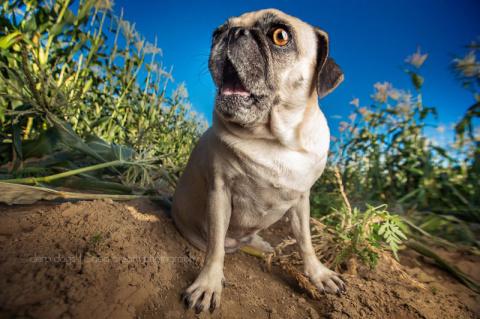 15 ужасно милых собак, которых застали врасплох