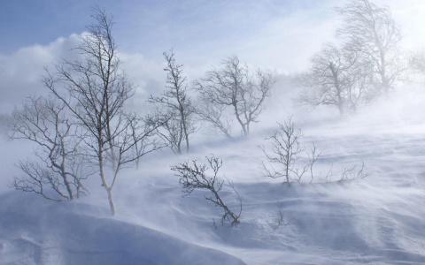 В область пришли аномальные холода