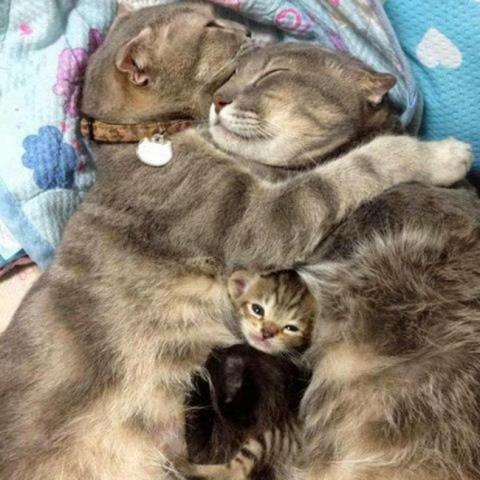 Трогательные фото,  которые напоминают о том, что забота, любовь и нежность нужны всем