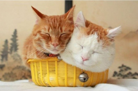 Кошки, которые любят сидеть …