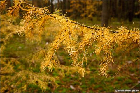 Хочется отдохнуть от суеты в осеннем лесу