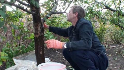 Правильный уход за корой деревьев