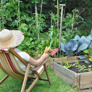 Огород на новый лад, или 4 идеи для продвинутого дачника
