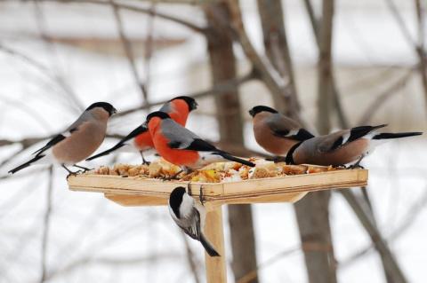 Покормите птиц, только не рисом!