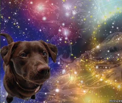 Породы собак для знаков Зодиака. Роль петуха в истории, культуре и мифологии