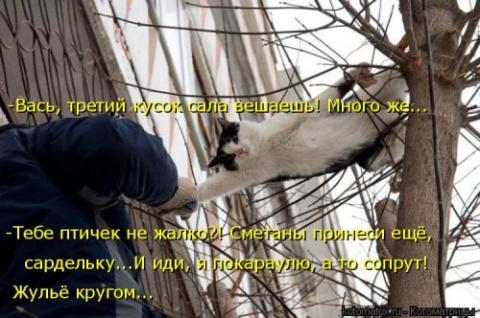 Свежая котоматрица (24 шт)