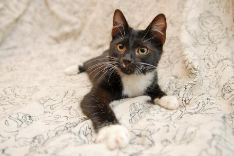 Изумительный котёнок ищет родной дом!