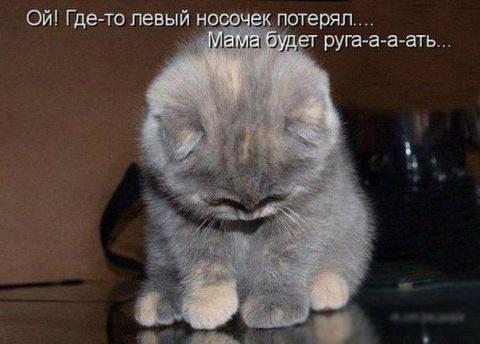 Кошки - это не только положительные эмоции, но и...