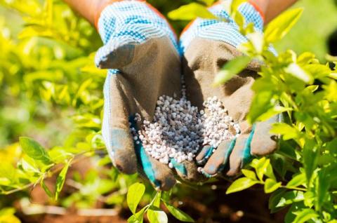 Еда для растений. Из чего делают удобрения?