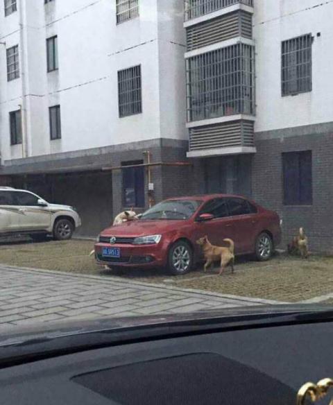 Выходя из машины, он пнул бр…