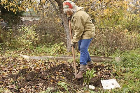 Осенняя подготовка грядок под определенные культуры