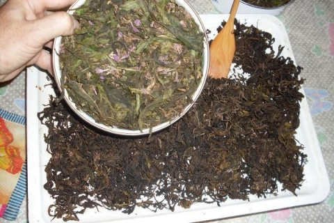 Чайный куст по-русски. В чём польза иван-чая и способы приготовления
