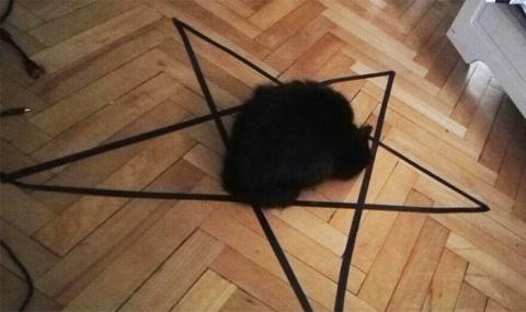 Хозяин чёрной кошки убедился в её демонической сущности