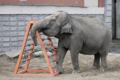 Екатеринбургский зоопарк принимает игрушки для животных