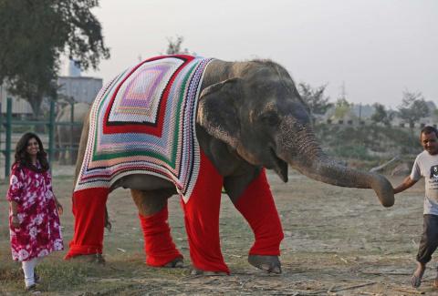 Чтоб я был слоном!